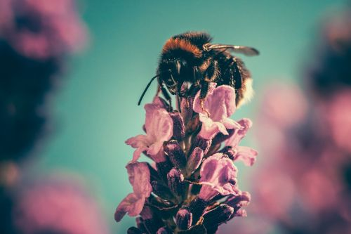 bee petal pollinate