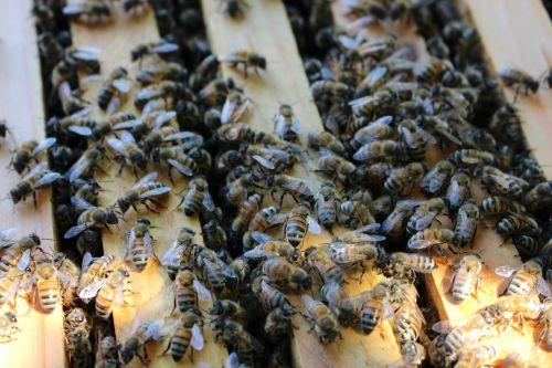 bee hive beekeeping