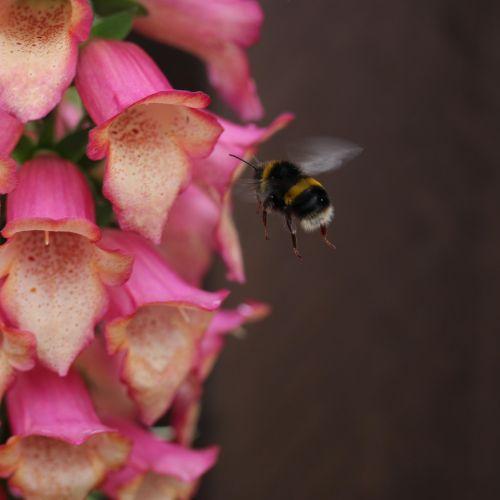 bee buzz fly
