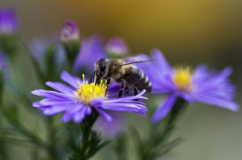 bee honey bee honeybee