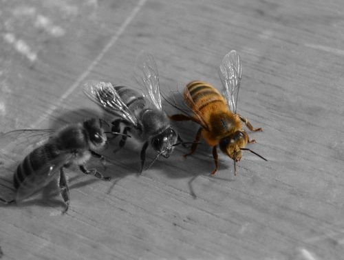 bee honeybee hive
