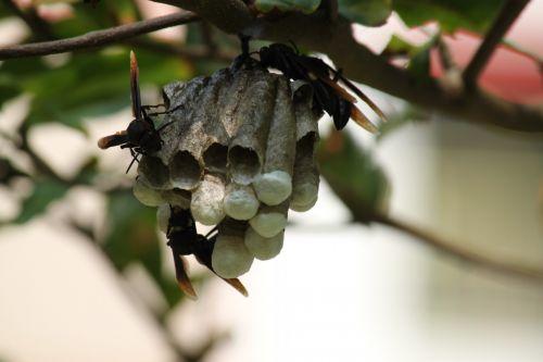 bee & nbsp, lizdas, lizdą, bitės & nbsp, užimtas & nbsp, lizdas, bičių lizdas