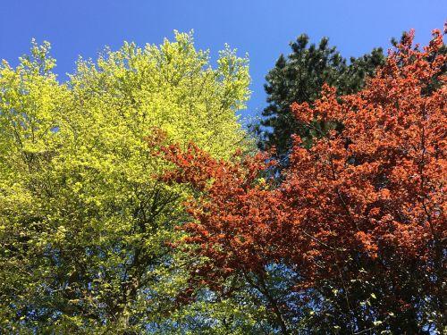 beech colours season