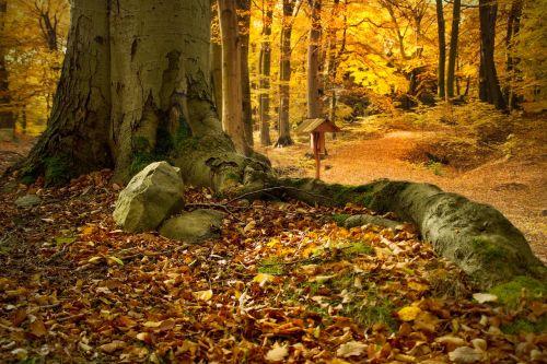 beech forest bučina beech