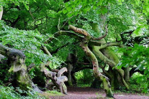 beech wood avenue trail