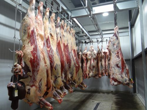 beef cow slaughterhouse