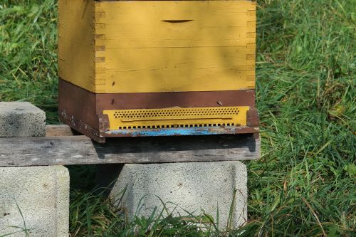 beehive bees insect