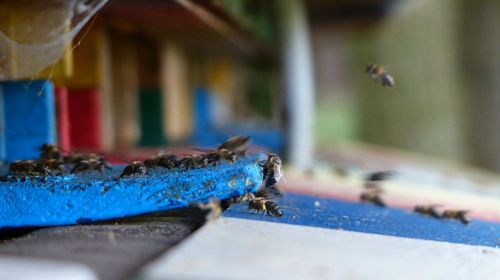 beehive bee apiformes hymenoptera hymenoptera