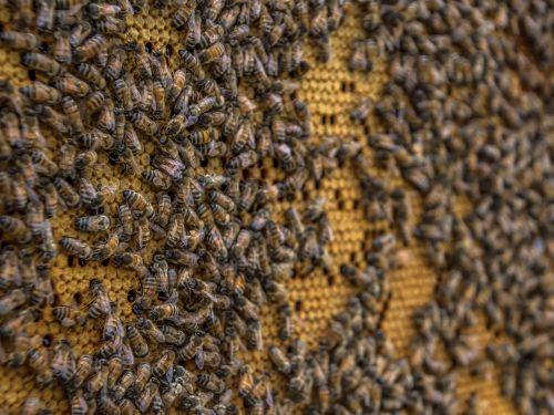 beehive bee honeycomb