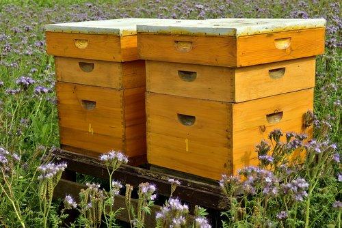 beehive  bees  bee keeping