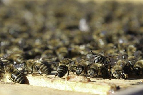 beehive  beekeeper  bees