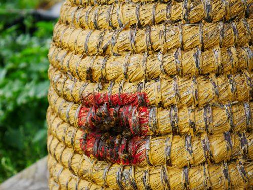 beehive bees bee