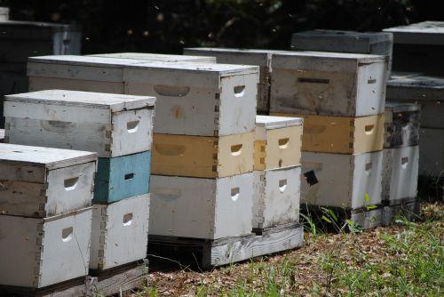 beehives honeybee bee