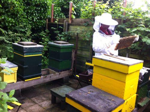 beekeeper bees cabinets