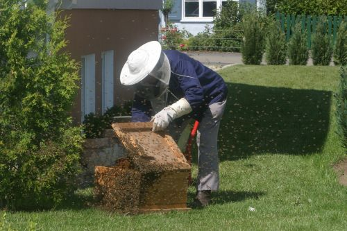 beekeeper bees garden