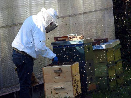 beekeeper bees bee hives