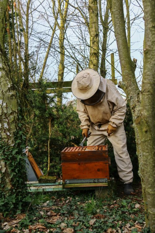 beekeeper honey hive