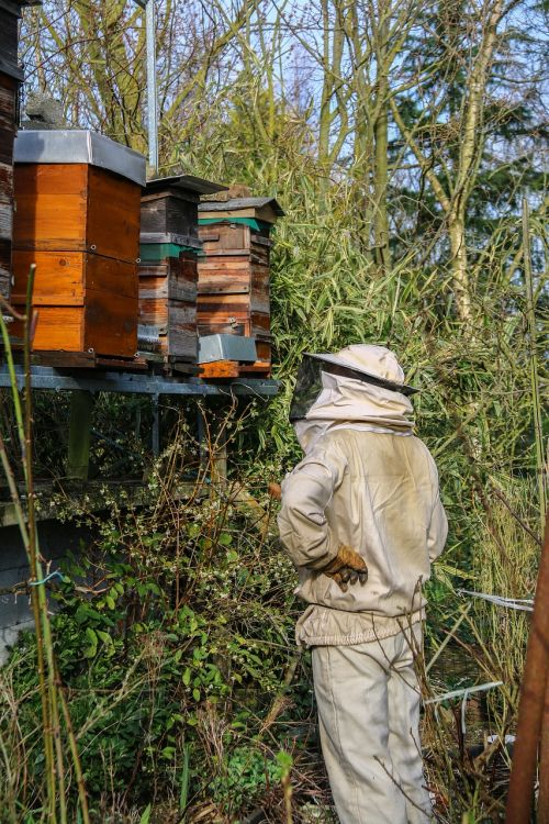 beekeeper honey hives