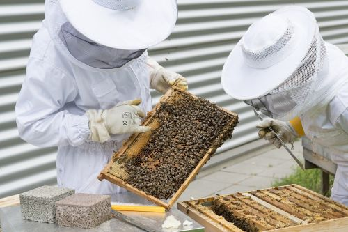 beekeeper bees beehive