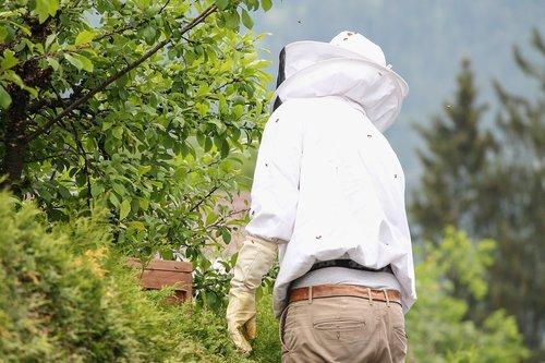 beekeeper  bee keeping  beekeeping