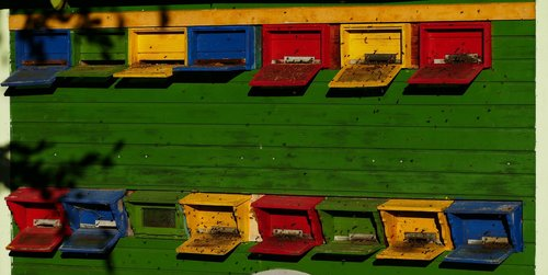 beekeeper  bees  nature