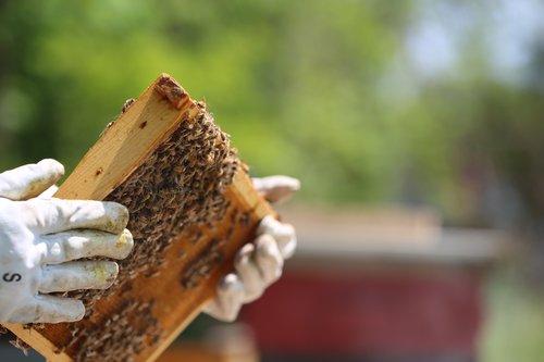 beekeeper  gloves  hives