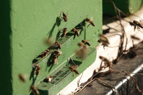 beekeeper  bees  pollen
