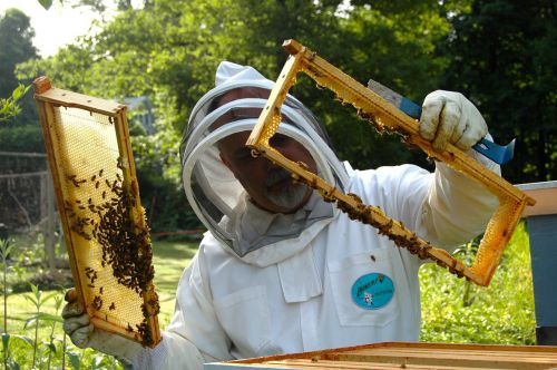 beekeeper hive inspection