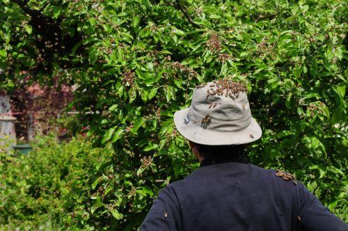 beekeeper bees hive