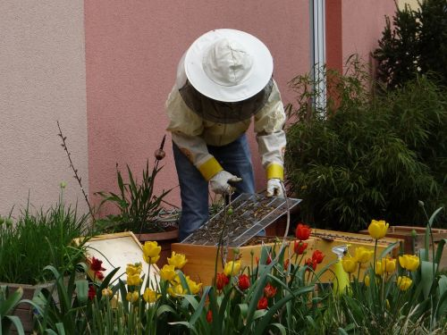 beekeeper bees human
