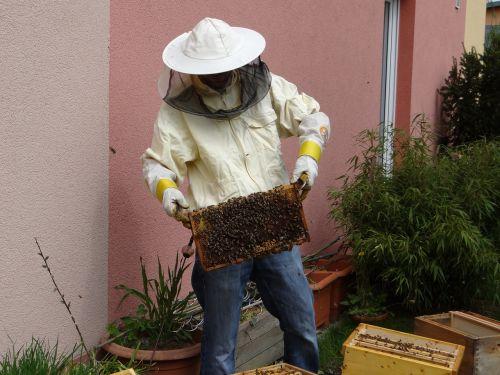 beekeeper honey beekeeping