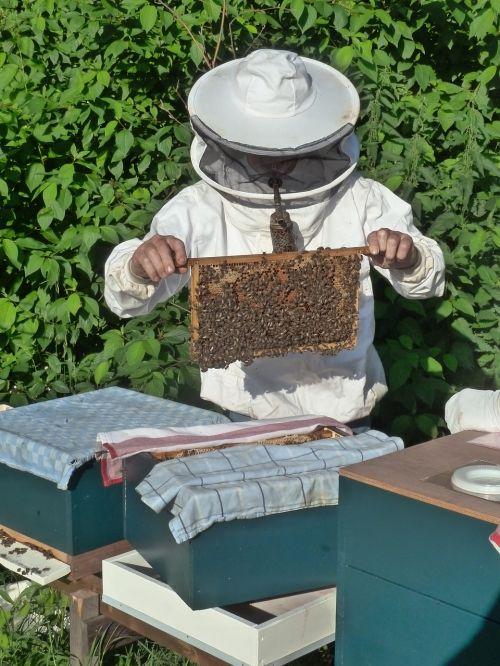 beekeeper breeding aflegger bees