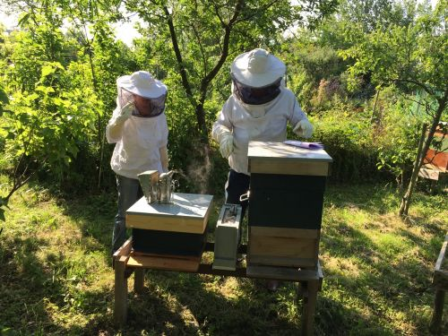 beekeepers bees hive