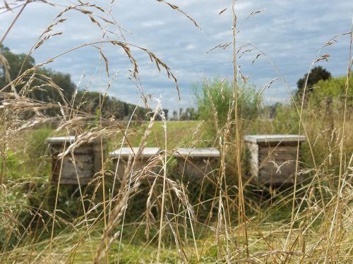 beekeeping bees field