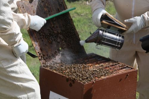 beekeeping hive bees