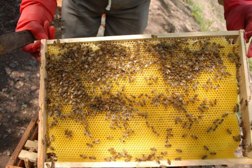 beekeeping hive honey