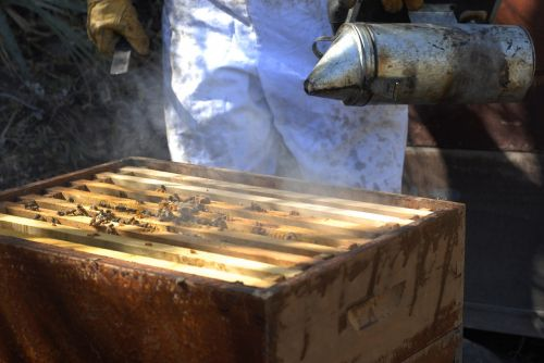 beekeeping bees honey