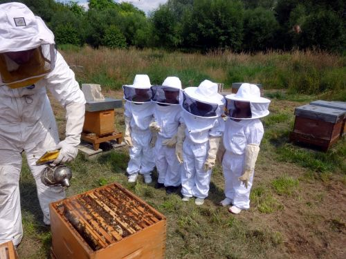 beekeeping course learn