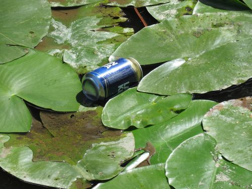 dust beer can water lily
