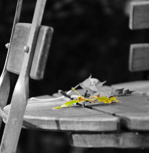 beer garden leaf autumn