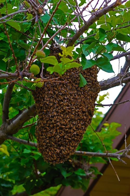 bees honeybees moving hive