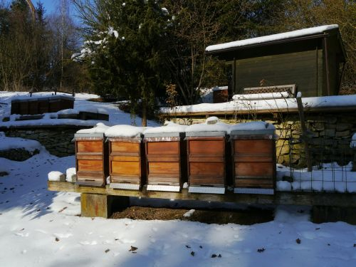 bees winter nature