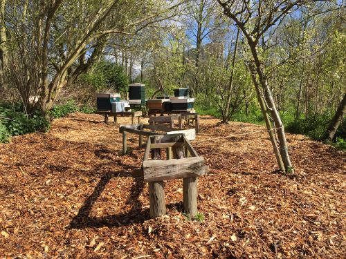 bees apiary bees tables