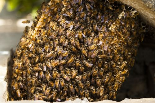bees hive honey