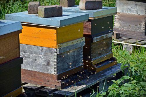 bees beehive honey bees