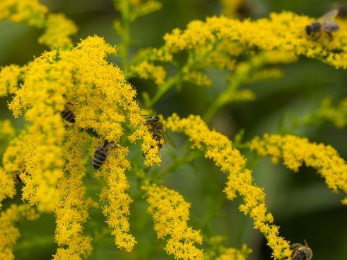 bees honey honey bee