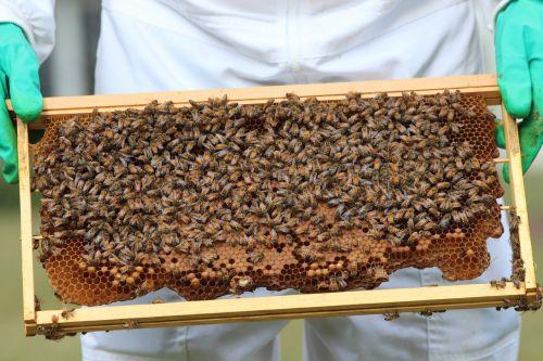 bees honeybees honey