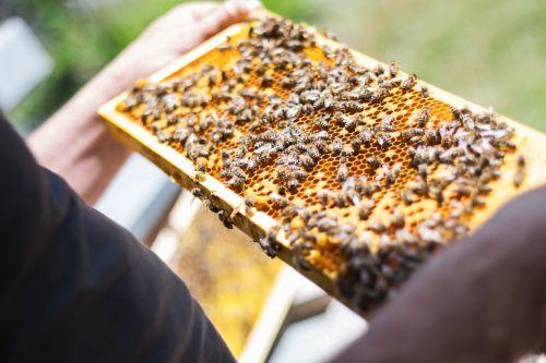 bees combs beekeeper