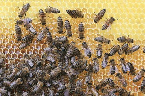 bees honeycomb beekeeper