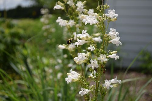 bees nature nectar